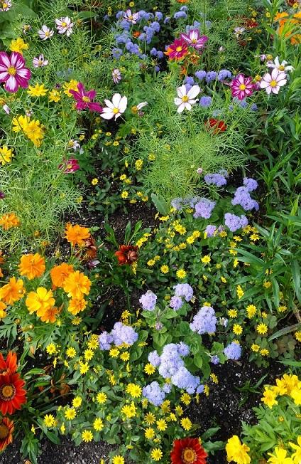 Bright Blooms.jpg