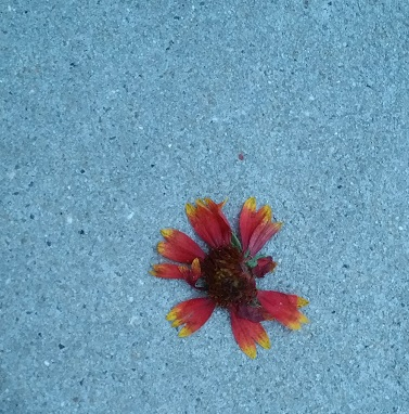 Flower on Cement