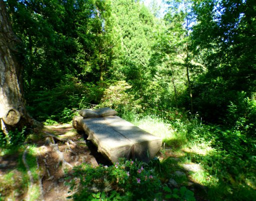The Bed in the Forest — #writephotoPeace