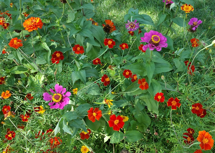A Neighbor's Flower Garden