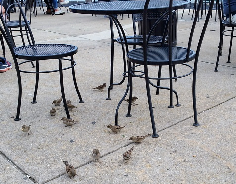Birds and Table at the Park