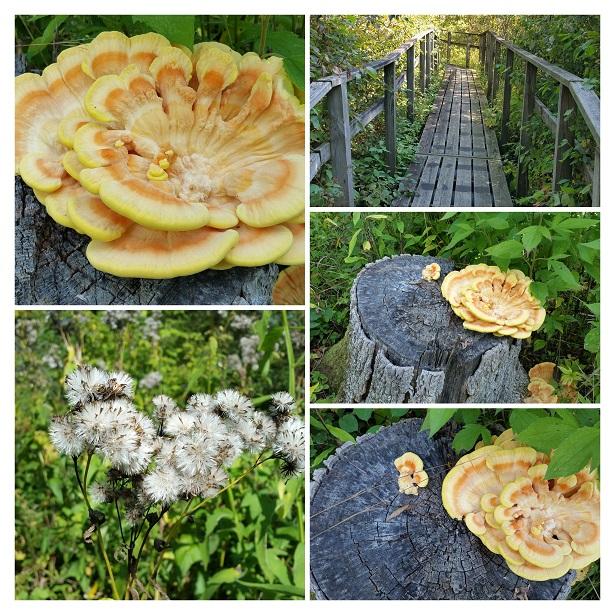 Mundane Fungus
