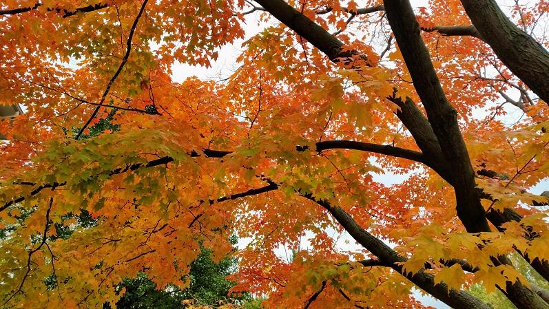 Deeper Autumn