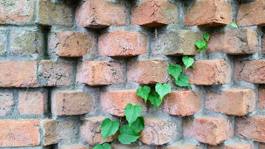 Life Changes the Brick Wall