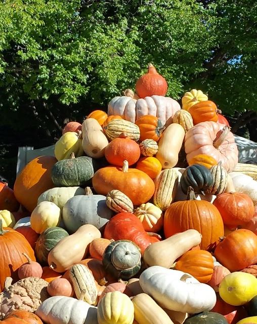 Pumpkin Pile