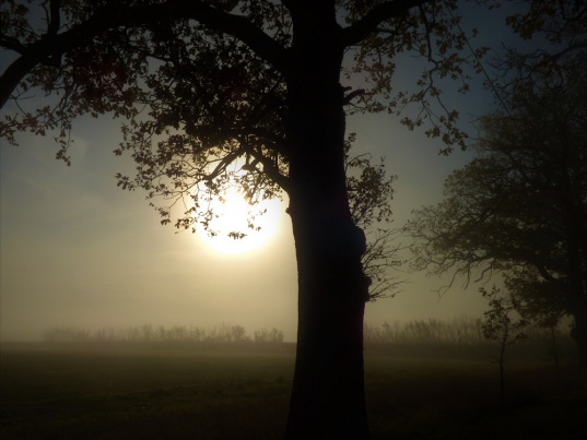 Sue Vincent's #writephoto prompt - fog