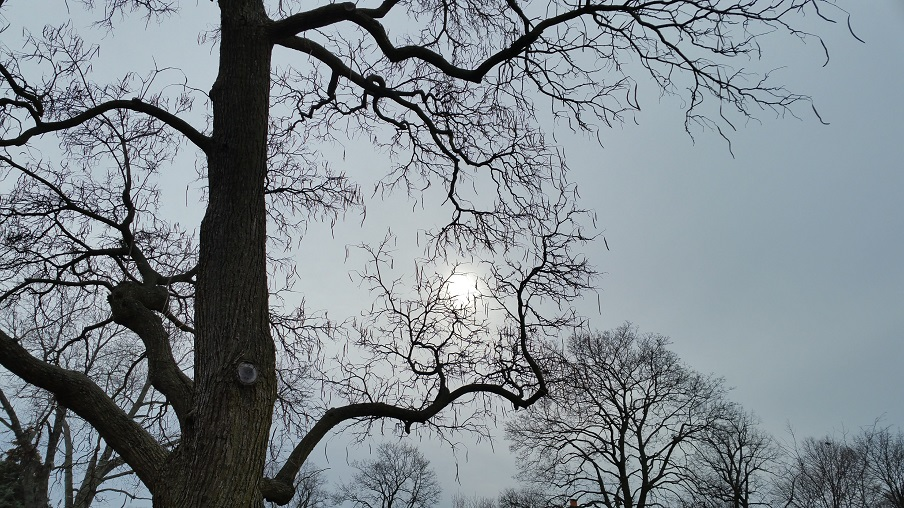 Winter Sun Through Trees