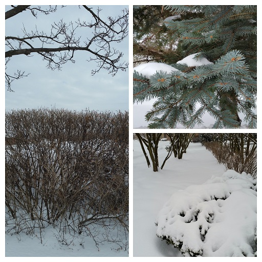 Love of Winter