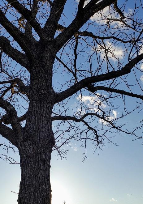 Tree Spending Time in Sunlight