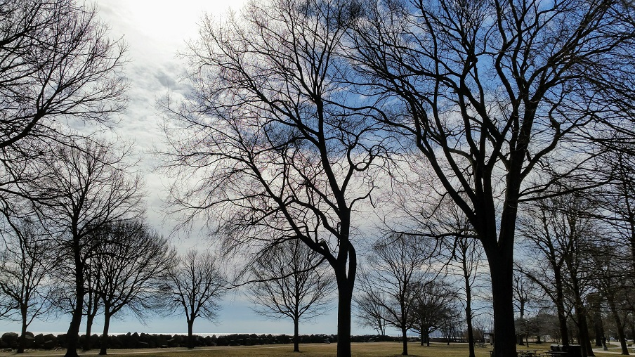 Trees Waking Up By Lake Michigan