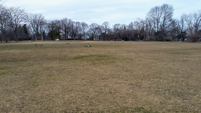 Open Space with Geese