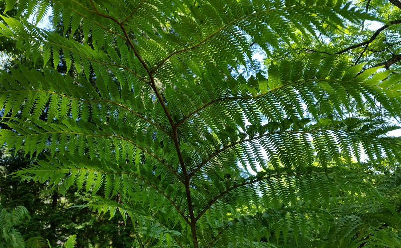 Fern Looking Up