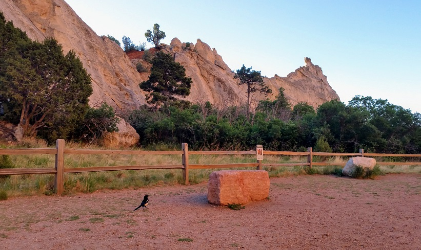 Magpie Amid Rock Formations