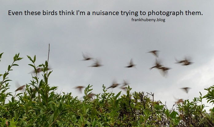 Even these birds think I'm a nuisance trying to photograph them.