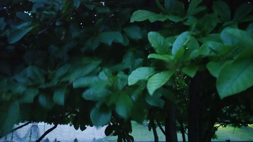 Evening Silhouette