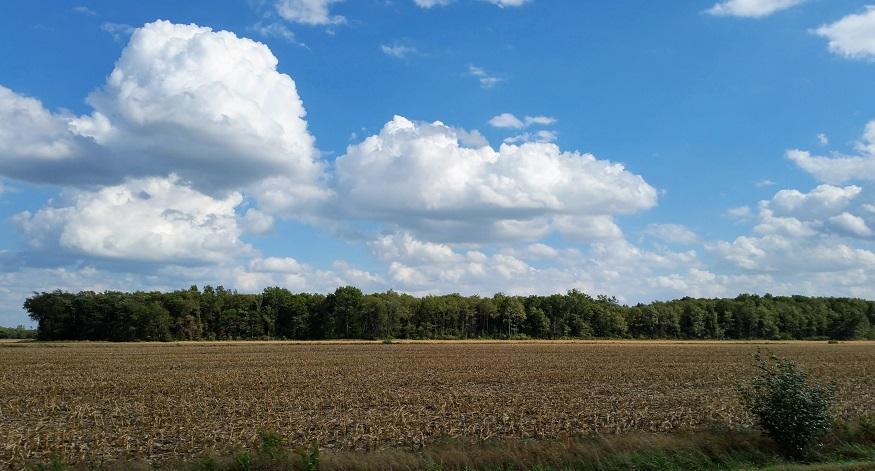 Harvesting Corn in October