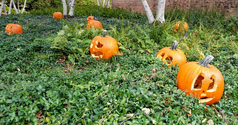 Pumpkin Circles