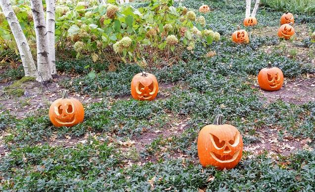 Pumpkin Spheres