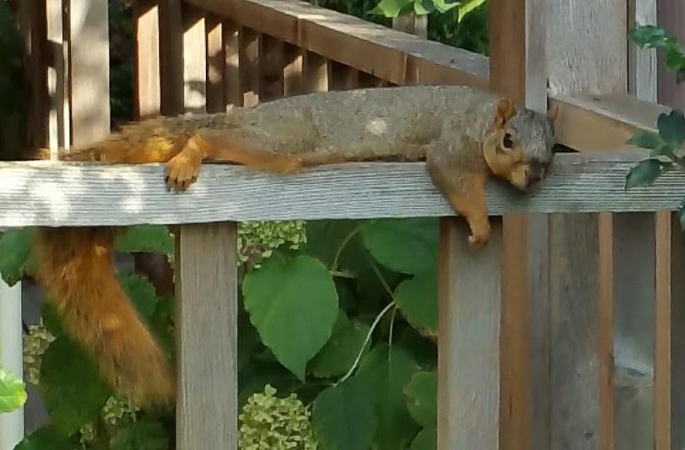 Squirrel by Frank Hubeny