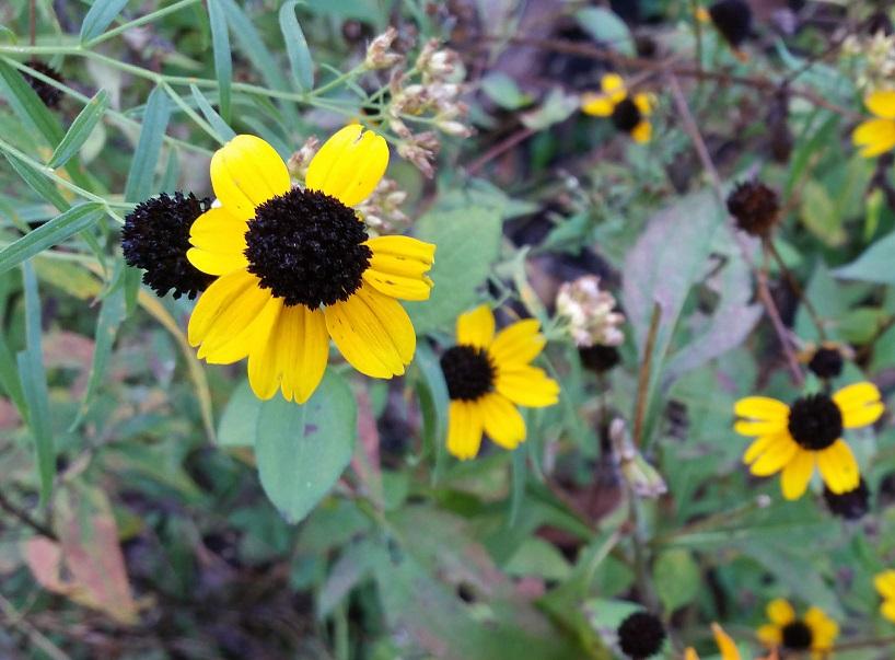 Bright Autumn Yellow