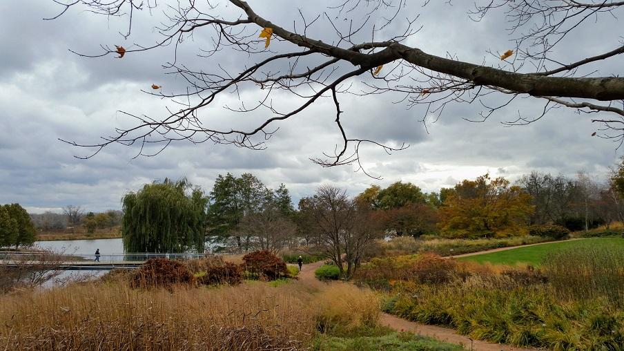 Autumn Leaves / AutumnLight