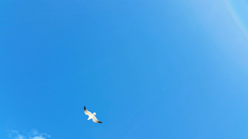 Seagull in the Sun