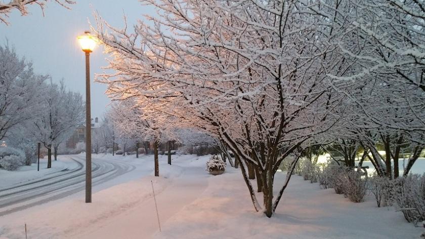 Streetlight and Snow