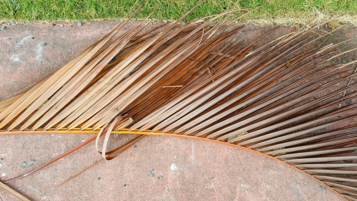 Fallen Palm Branch