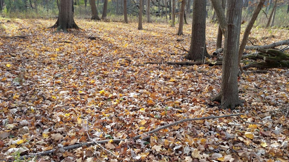 Leaf-Covered Forest Floor