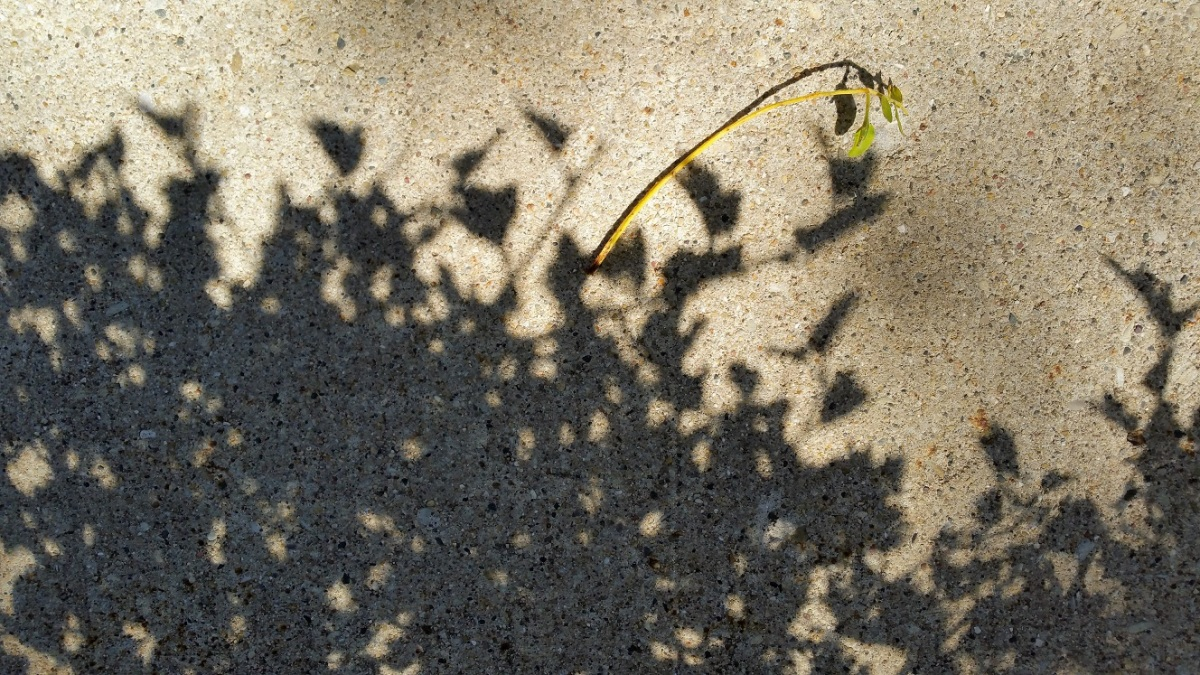 Twig With Shadows