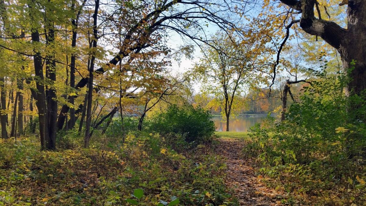 Potawatomi Woods