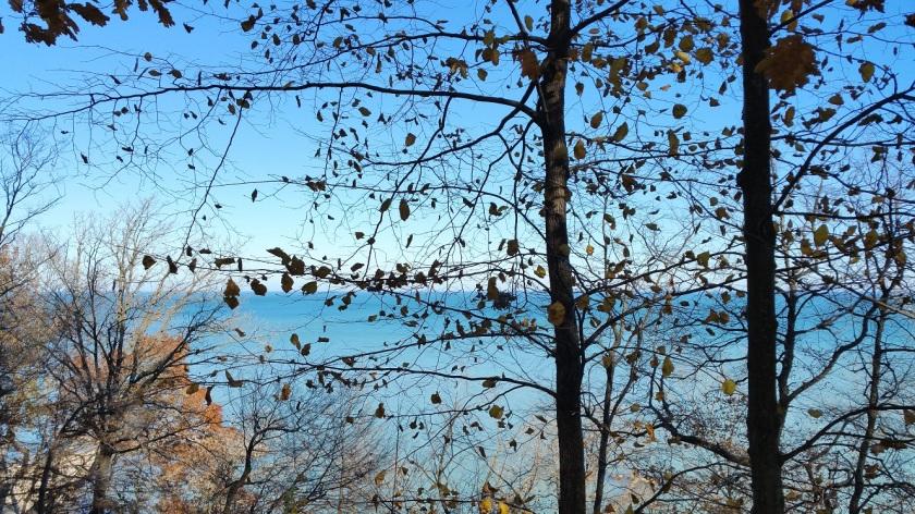 Lake Michigan Through a Nearly Leafless Tree