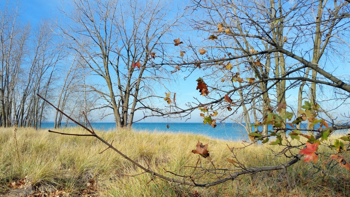 Lake Michigan Through Leaves