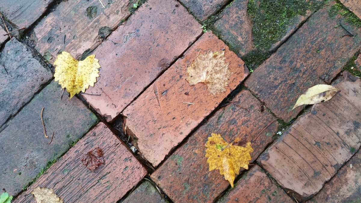 Bricks and Leaves