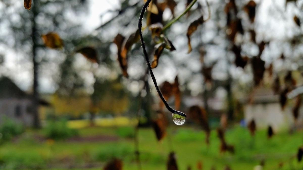 Water Drop Ready To Fall