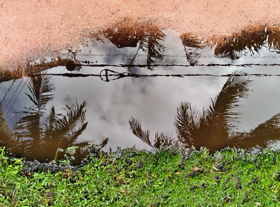 Watery Rabbit Hole