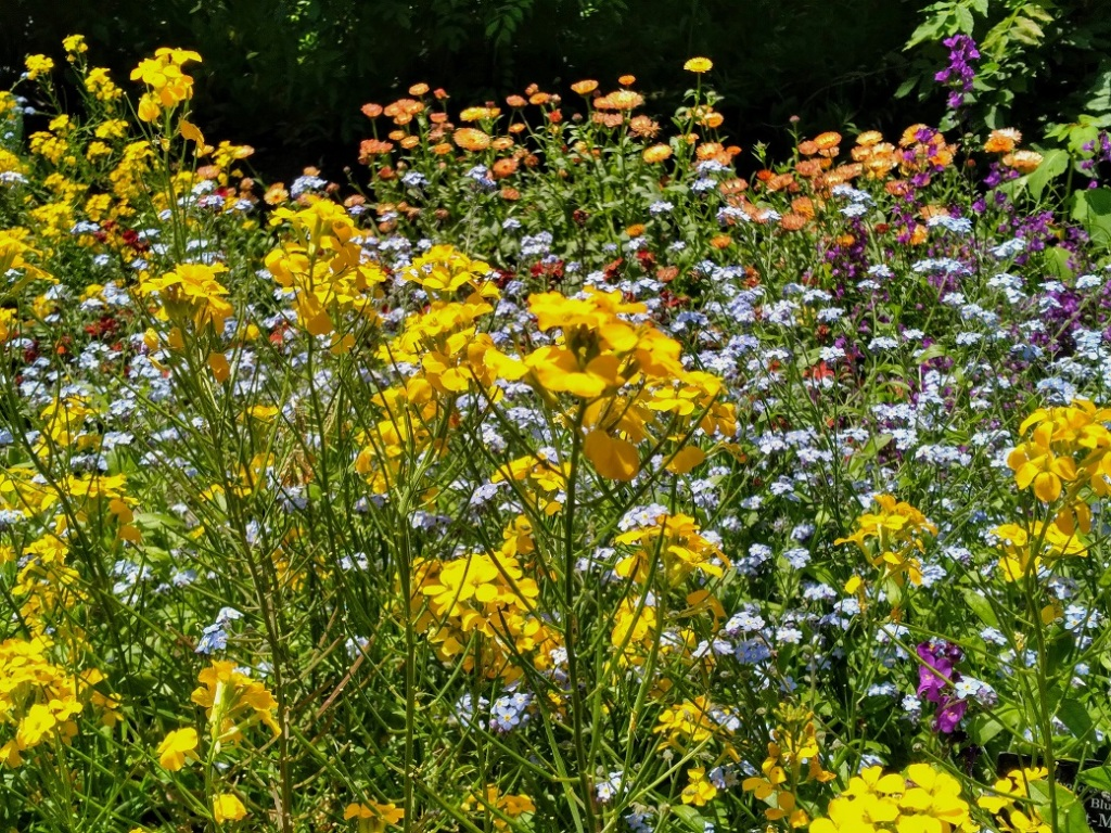 Many Bright Flowers