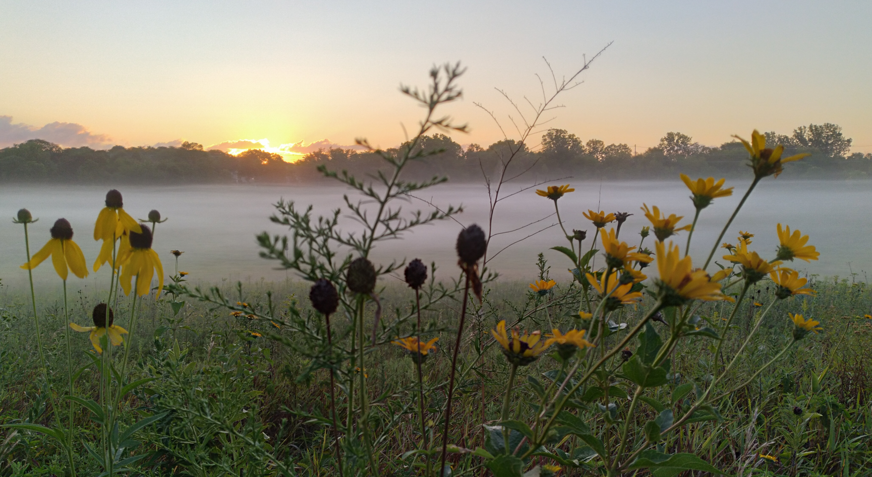 Morning Mist and Flowers